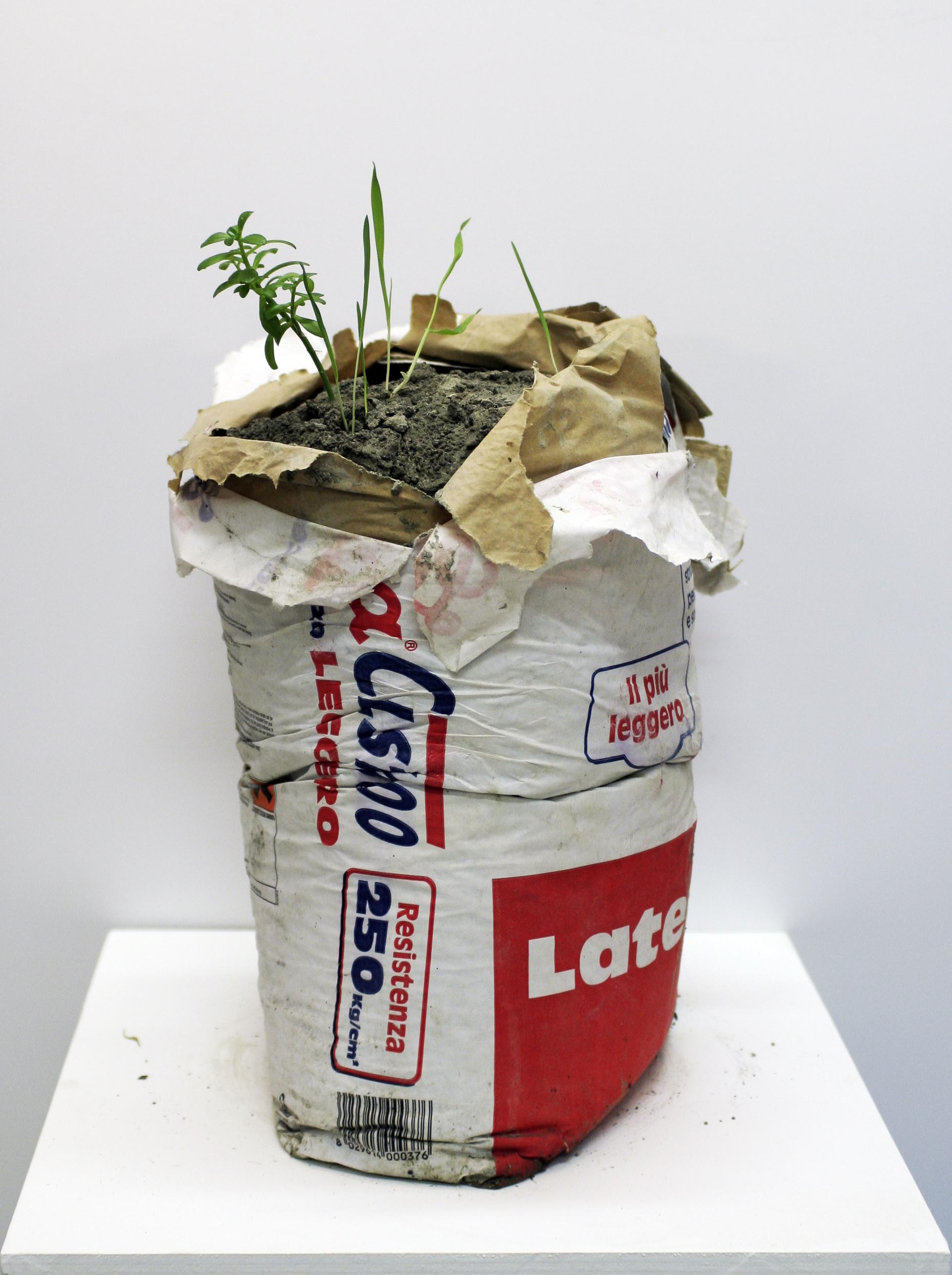 Performance of a plant - 2013, concrete bag and spontaneous plant