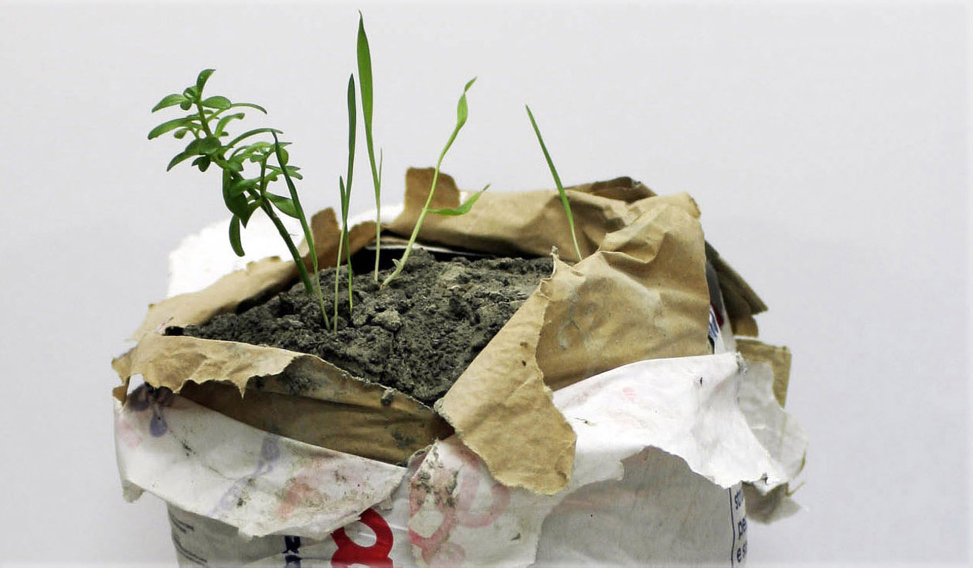 DETAIL: Performance of a plant - 2013, concrete bag and spontaneous plant